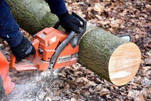 cutting wood, lamberjack