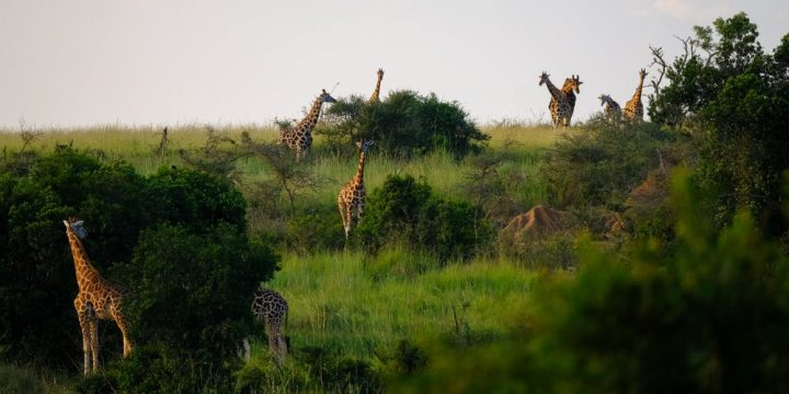 Here are the Benefits of Going on a Conservation Safari