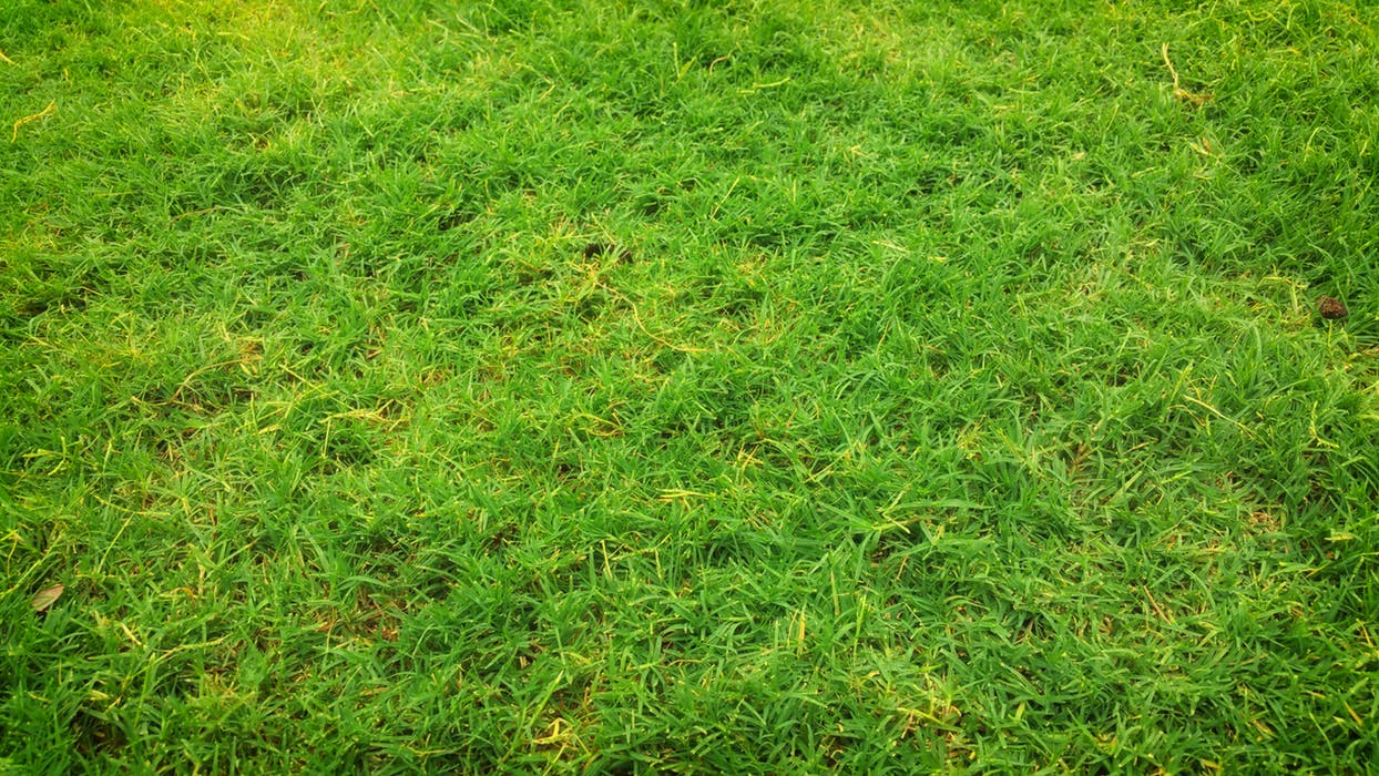 close up look of an artificial lawn Adelaide product