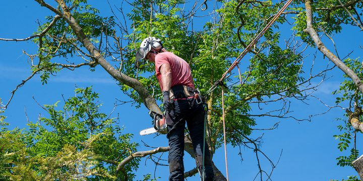 What Is The Purpose Of An Arborist?